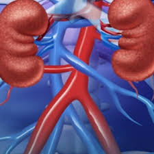 KIDNEY FUNCTION TEST (KFT)